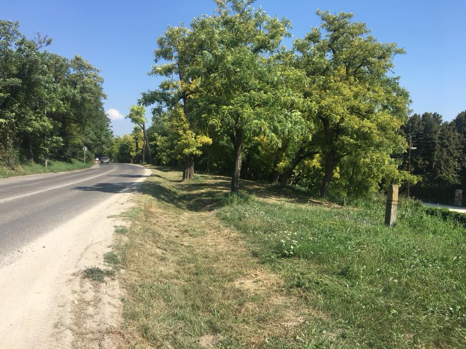 Fűnyírás a Budaörsi úton